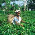 Informazioni Dibrugarh – Assam, India