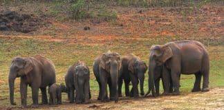 Viaggio in Tamilnadu e Kerala