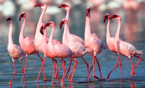 Flamingo - Gujarat, India - Viaggio tribale in Gujarat