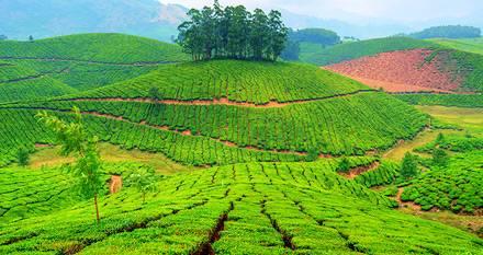 Munnar, Kerala - Viaggio per la festa Onam - Kerala