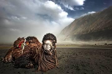 Valle di Nubra - Viaggio per la Festa Hemis a Leh