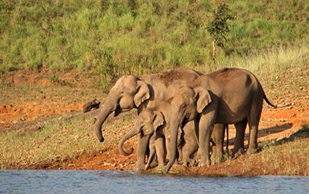 Parco nazionale di Periyar, Kerala - Viaggio per la festa Onam - Kerala