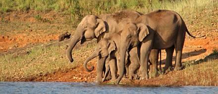 Parco nazionale di Periyar, Kerala - India, Viaggio in Tamilnadu e Kerala