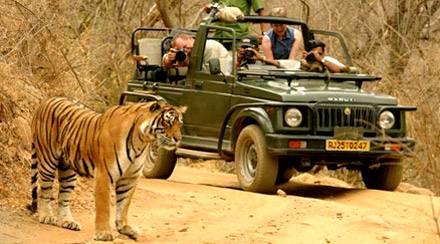 Informazioni Ranthambore National Park, Rajasthan - India