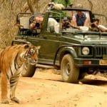 tigre-ranthambore