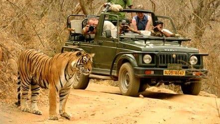 Tigre al parco Ranthambore, India - Viaggio di nozze a bordo del treno di lusso in India