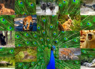 Viaggio in India selvaggia