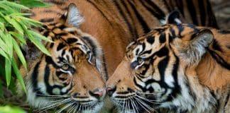 Nel paese delle tigri, Viaggio in India, sulle orme di mowgli