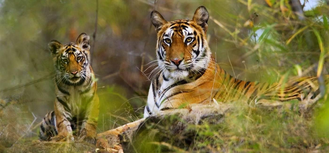 Informazioni Parco Nazionale Bandhavgarh - Madhya Pradesh, India