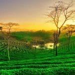 Informazioni Dibrugarh - Assam, India