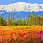 Informazioni Gulmarg – Kashmir, India