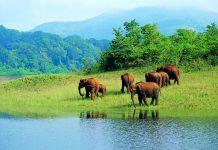 Offerta viaggio in Kerala