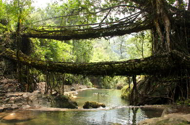 Ponte di radici a Mawlynnong - Viaggio tribale in Assam e Meghalaya, India