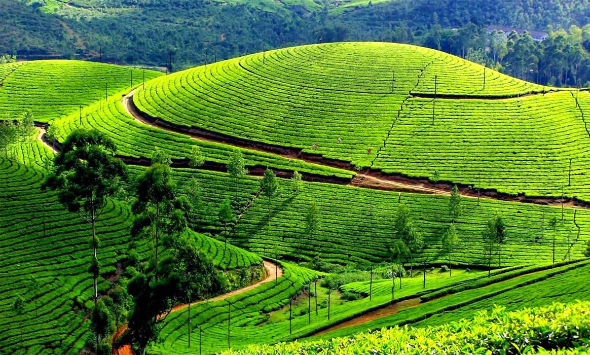 Informazioni Ooty, Tamil Nadu - India