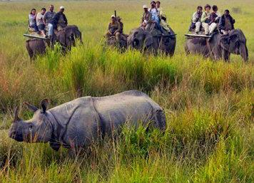 Safari al parco nazionale di Kaziranga - Viaggio tribale in Assam e Meghalaya, India