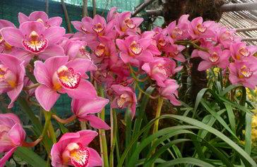Santuario delle Orchidee a Deorali - Viaggio in Sikkim, India