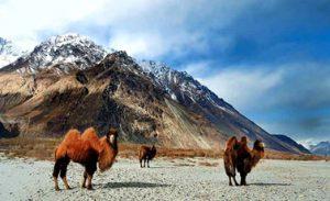 Informazioni Valle di Nubra - Leh Ladakh, India